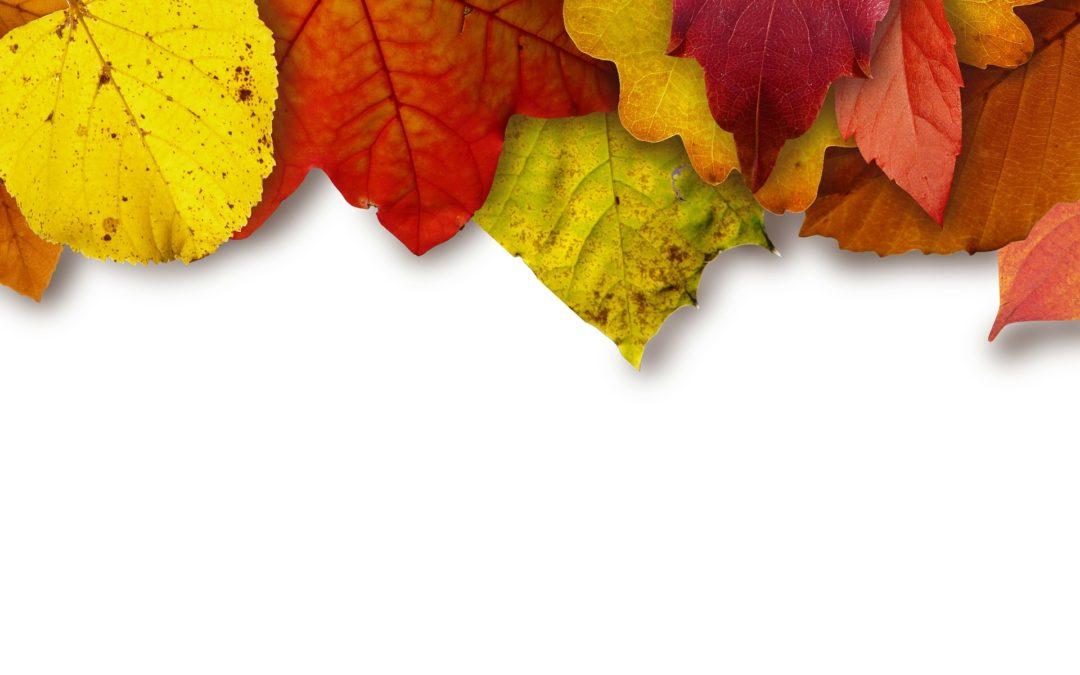 En regardant les feuilles tomber, je me disais…