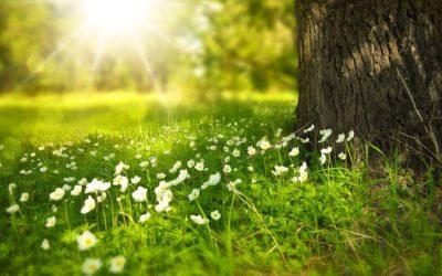 En ce jour du printemps…